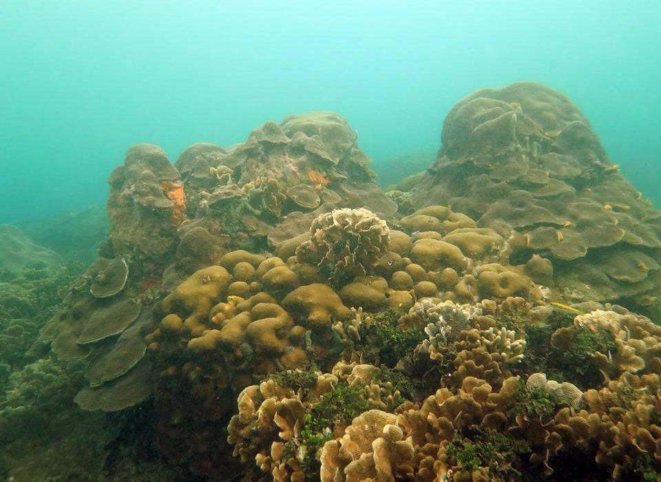 Salvemos Varadero, la campaña para proteger los ecosistemas marinos