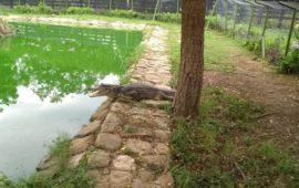 Parque temático Vivarium una espectacular experiencia entre reptiles y anfibios